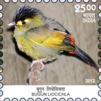 Bugun Liocichla 16-10-2012_1
