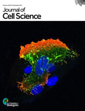Understanding Cancer: Role of DNA-dependent proteinkinase